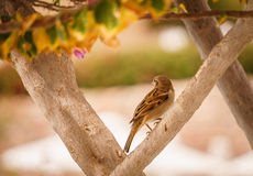 Songbird in the summer garden. Little Sparrow in the picturesque summer garden. Beautiful summer card. Bird and flowering gardens of bougainvillea stock photo
