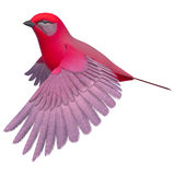 Songbird Tanager. 3d digital render of a flying songbird tanager isolated on white background Stock Photo