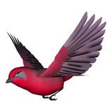 Songbird Tanager. 3d digital render of a songbird tanager isolated on white background Royalty Free Stock Images
