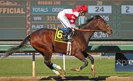 Songbird Wins The Las Virgenes Stakes Stock Photos