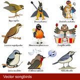 Songbirds Stock Images