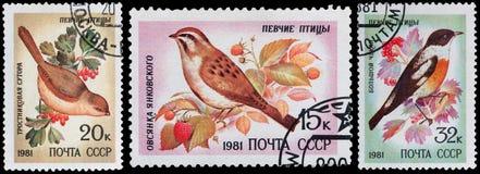 songbirds Imagens de Stock