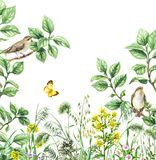 Songbirds on Branches and Wildflowers. Watercolor painting.  Hand drawn illustration. Green meadow with songbird and insect. Aquarelle collage made with forest Stock Image