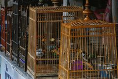 Songbirds in cages, Thailand. Wild songbirds in cages, Thailand stock photo