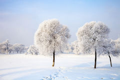 Songhua River Rime. Eastphoto, tukuchina, Songhua River Rime, Nature, Beauty Stock Photo