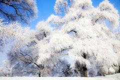 Songhua River Rime. Eastphoto, tukuchina, Songhua River Rime, Nature, Beauty Royalty Free Stock Photos