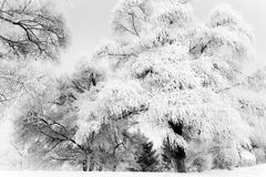 Songhua River Rime. Eastphoto, tukuchina, Songhua River Rime, Nature, Beauty Royalty Free Stock Image