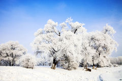 Songhua River Rime Royalty Free Stock Photos