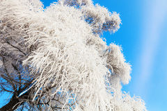 Songhua River Rime Royalty Free Stock Photo