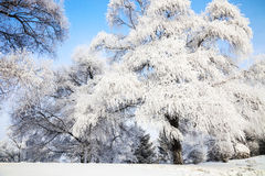 Songhua River Rime Royalty Free Stock Images