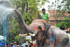 Songkarn festival 2014. Ayutthaya Thailand -April 13, 2014 - elephant splash the water in Songkarn day Royalty Free Stock Photography