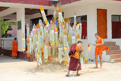 Songkran节日在一个传统新年,修士庆祝来装饰桐树我 免版税库存图片
