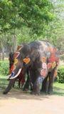 Songkran节日庆祝与大象在阿尤特拉利夫雷斯 免版税图库摄影