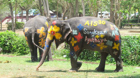 Songkran Festival is celebrated with elephants in Ayutthaya. The Songkran festival (Thai: สงกรานต์) is celebrated in Thailand as the traditional stock photography