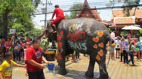 Songkran Festival is celebrated with elephants in Ayutthaya. The Songkran festival (Thai: สงกรานต์) is celebrated in Thailand as the traditional royalty free stock photo