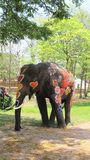 Songkran Festival is celebrated with elephants in Ayutthaya Royalty Free Stock Photos