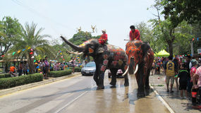 Songkran Festival is celebrated with elephants in Ayutthaya. The Songkran festival (Thai: สงกรานต์) is celebrated in Thailand as the traditional stock photo