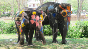 Songkran Festival is celebrated with elephants in Ayutthaya. The Songkran festival (Thai: สงกรานต์) is celebrated in Thailand as the traditional stock image