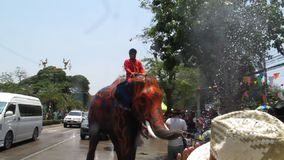 Songkran Festival is celebrated with elephants in Ayutthaya stock video footage