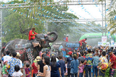 Songkran festival with elephant. 4-14-2017 Elephants have a splashing time during the Songkran Water Festival in ayutthaya Thailand Royalty Free Stock Photo