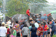 Songkran festival with elephant. 4-14-2017 Elephants have a splashing time during the Songkran Water Festival in ayutthaya Thailand Stock Image