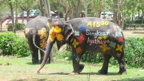 Songkran-Festival wird mit Elefanten in Ayutthaya gefeiert Stockfotografie