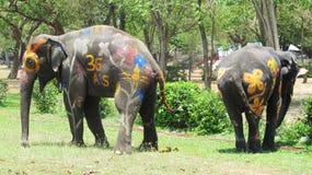 Songkran festiwal świętuje z słoniami w Ayutthaya Obrazy Royalty Free
