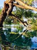 Sonhando a árvore foto de stock