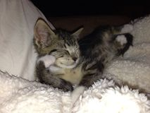 Sonhando o gatinho foto de stock