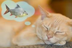 Sonhando o gato Imagens de Stock