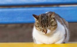 Sonhando o gato Foto de Stock