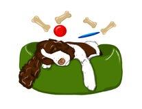 Sonhando o Spaniel de Springer Fotografia de Stock Royalty Free