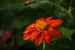 Sonho da flora fotos de stock royalty free