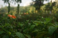 Sonho da flora fotografia de stock
