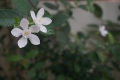 Sonho da flora imagens de stock