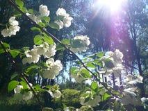 Sonho de Sun Imagem de Stock