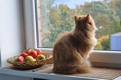 Sonho do gato Imagem de Stock