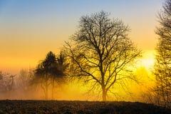 Sonho do inverno Imagem de Stock Royalty Free