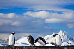 Sonho dos pinguins fotos de stock royalty free