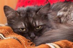 Sonho fumarento do gato Imagens de Stock