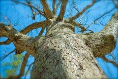 Sonho mau sobre uma árvore irritada Fotografia de Stock Royalty Free
