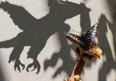 Sonhos da borboleta de transformar-se uma águia Imagens de Stock Royalty Free