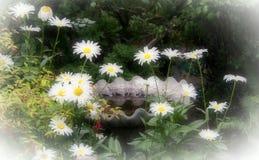 Sonhos das margaridas no jardim com banho do pássaro Imagem de Stock Royalty Free