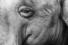 Sonhos do elefante Fotos de Stock Royalty Free