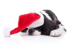 Sonhos do Natal do cão imagem de stock