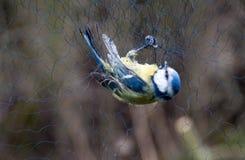 Sonido del pájaro Fotos de archivo libres de regalías