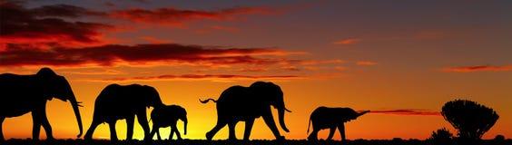 słonie Obrazy Stock