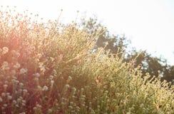 Sonne der wilden Blumen morgens Stockbilder