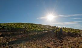 Sonne des frühen Morgens, die auf Weinbergen Paso Robles im Central Valley von Kalifornien USA scheint Stockbilder
