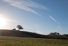 Sonne des frühen Morgens, die nahe bei Tal-Eiche auf Hügel in Weinanbaugebiet Paso Robles im Central Valley von Kalifornien USA s Lizenzfreie Stockbilder